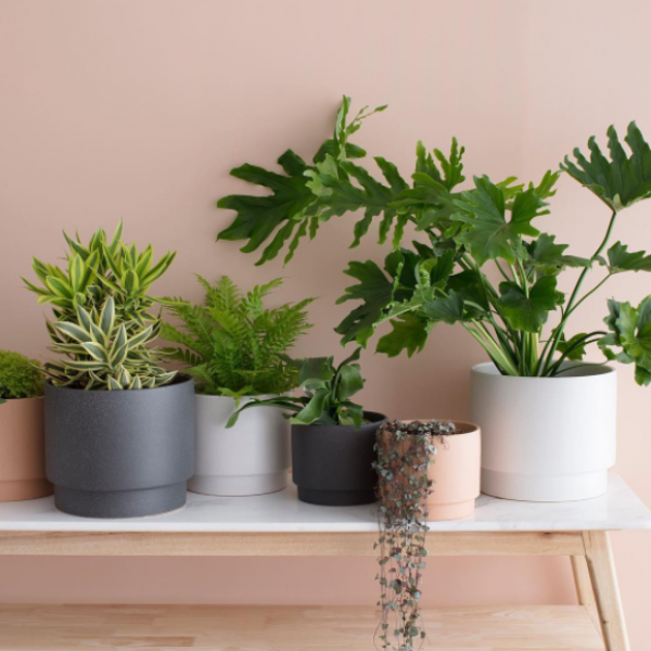 Shop this great range of textured pots....             (with drainage holes)
