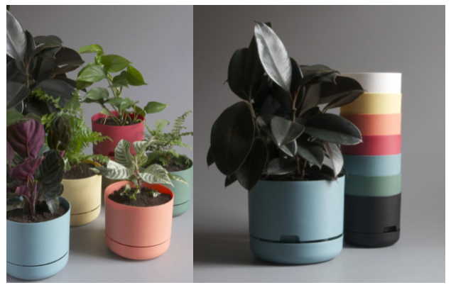 We interview Mr Kitly about their Collaboration with Decor Self Watering Pots!